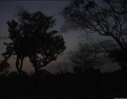 african madrugadaessai