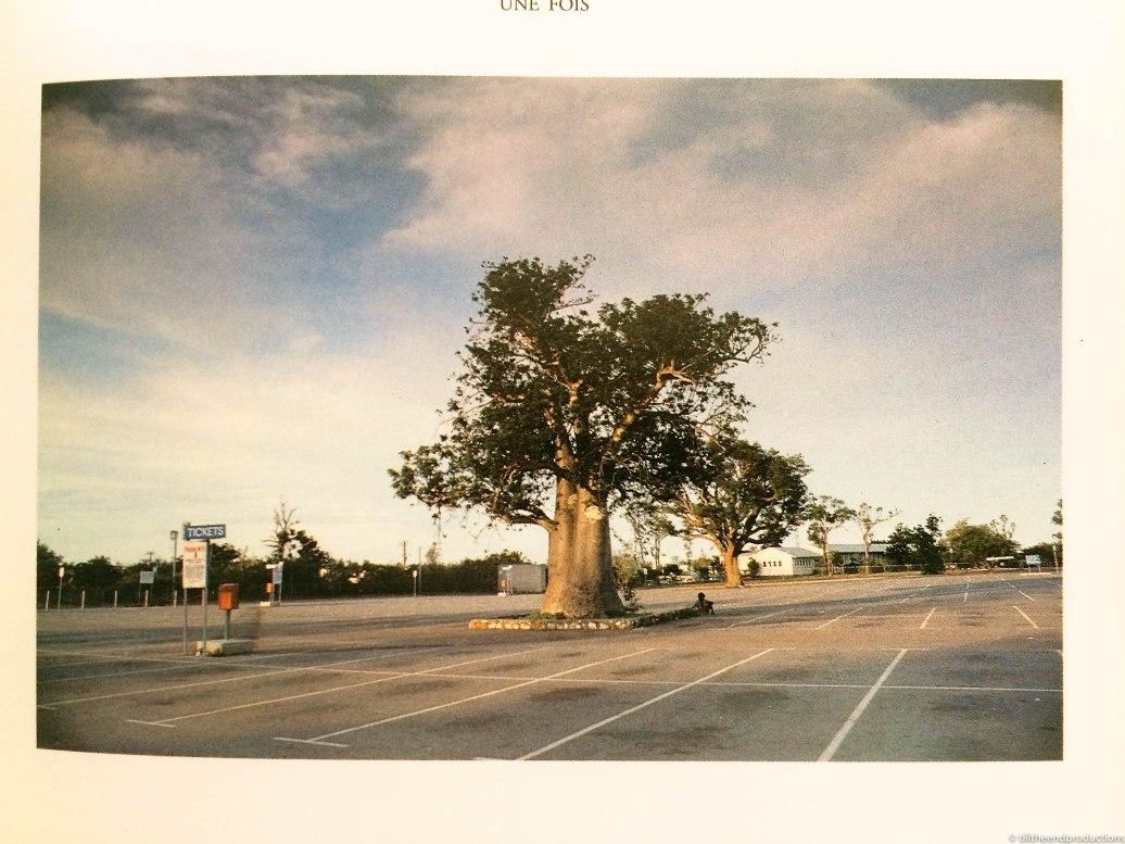 le baobab de wim