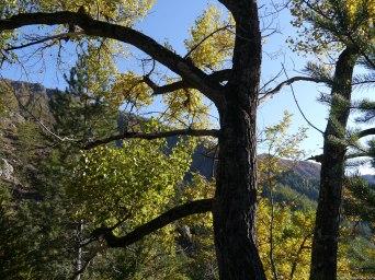 Arborescentessai